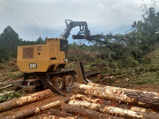 buy, sell timber, wood, logs in east texas
