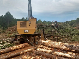 timber land management in east texas