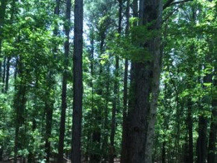 timber tract land management east texas timberline forestry