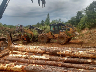 hardwood, pulp wood, logs, loggin, harvest timber east texas