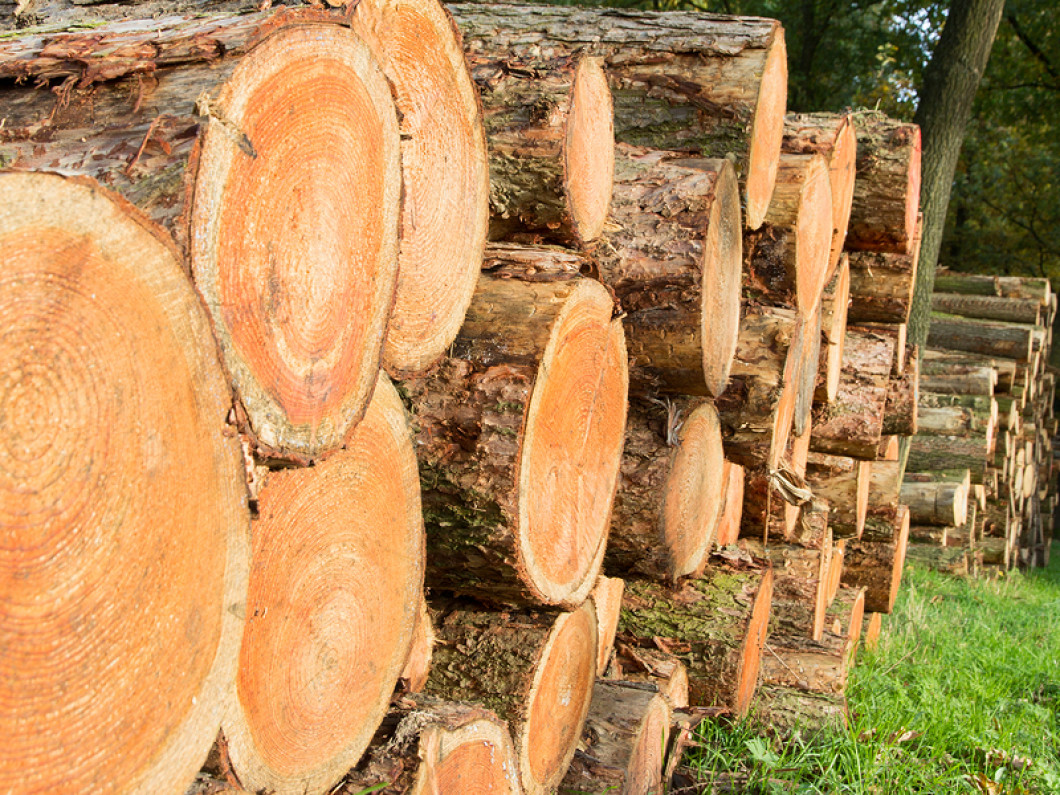 Timber harvesting and logging company the buys timber and sells timber in East Texas