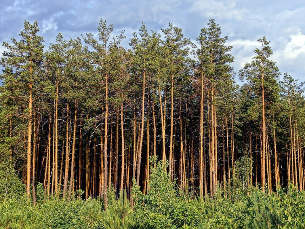 Is Your Land Ready for a New Crop of Trees?