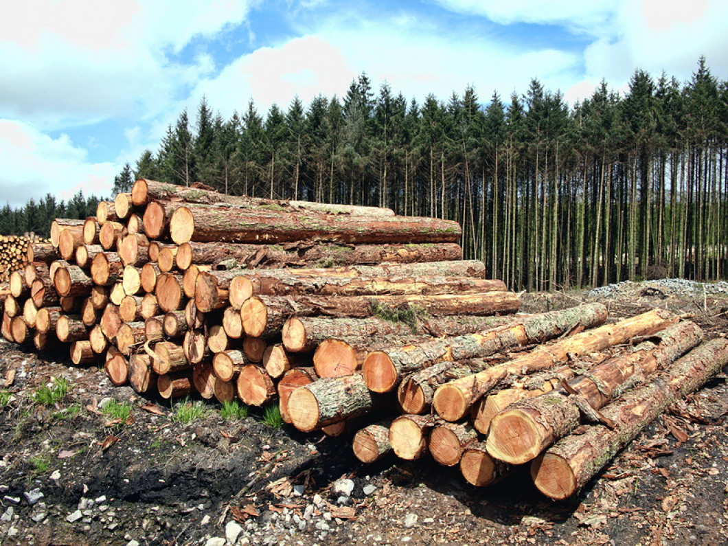 Total timber harvesting in East Texas while protecting the environment. Timberline Forestry out of Atlanta, TX does a fantastic job.